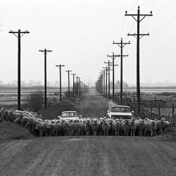 Buckeye Road 1985 - Image 1 of 50