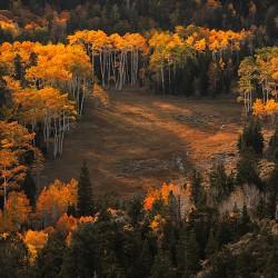 Serene Meadow - Image 14 of 50