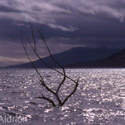 Pyramid Lake Winter - Image 40 of 50