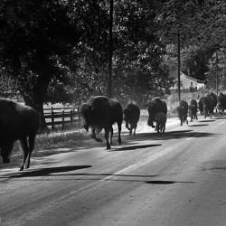 Buffalo Drive Genoa - Image 26 of 50