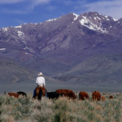 Santa Rosa Range - Image 27 of 50
