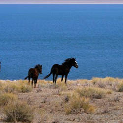 Wild Horses Walker Lake - Image 17 of 50