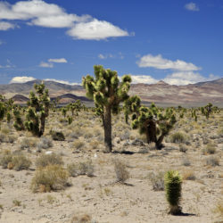 A Tour of Southern Nevada